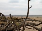 Lībiešu krasts