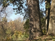 Ventas reģionālais parks