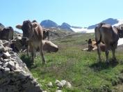 Gasteinas Alpi