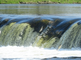 Pavasara palu šovs Lido zivis Kuldīgā 2020 un Jūrkalne?v=1585596290
