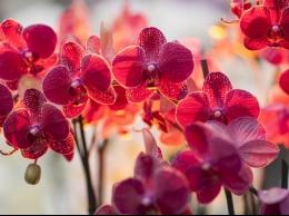 Sveicam Sieviešu dienā -Tallina un Orhideju svētki?v=1550714991